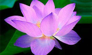Méditation Pleine Présence et Mardis du Dharma